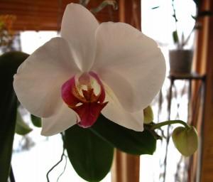 orkide2 300x256 orkide