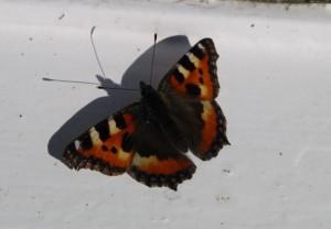 sommerfugl 300x208 Endelig vår