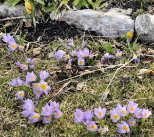 Vårlig 300x267 Vårlig