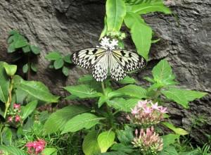 sommerfugl 300x220 Sommersesongen igang igjen