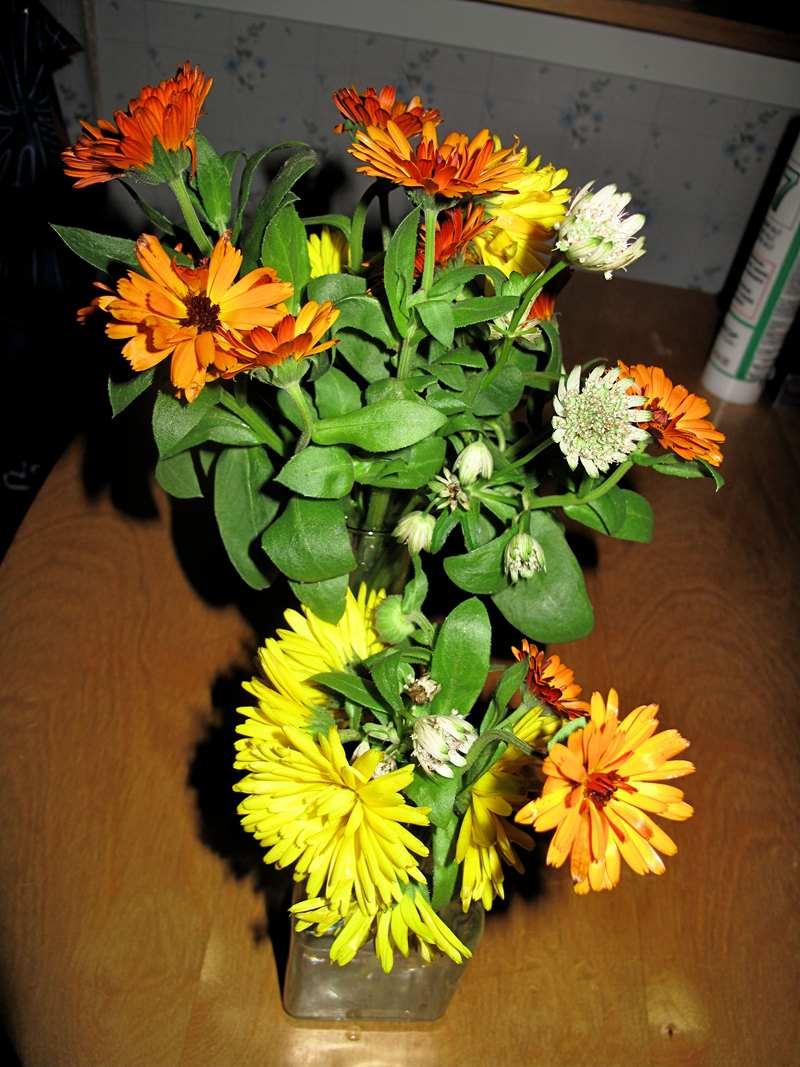 Dagens blomsterbuketter fra hagen