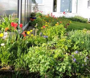 Ett av blomsterbedene. Og her er det plass til mange sommerblomster?